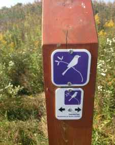 trail marker (not always informative... but very pretty!)